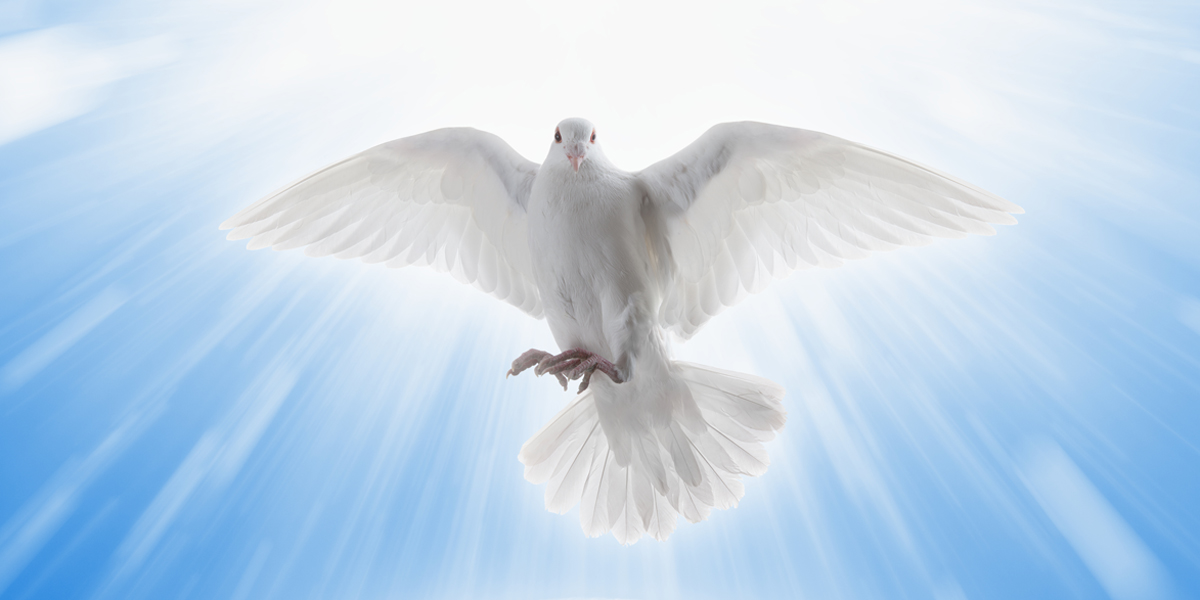 HOLY SPIRIT,DOVE