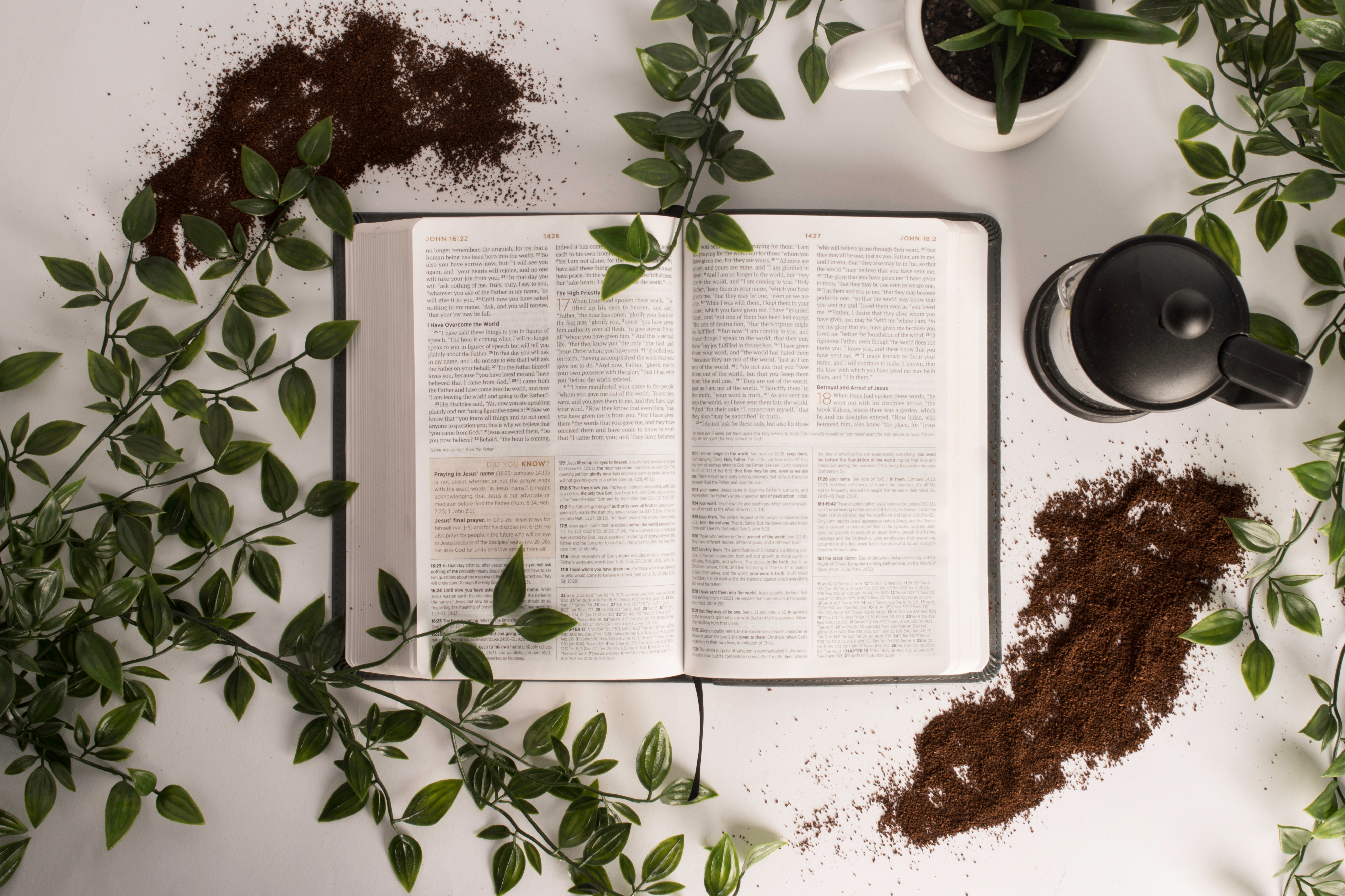 Biblia rosliny i kawa