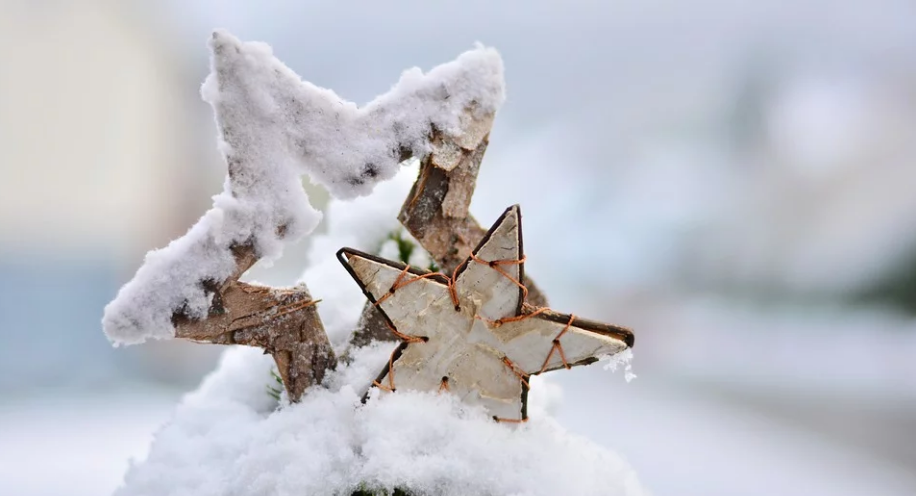 Snow Winter Wintry Star Poinsettia Christmas Cold