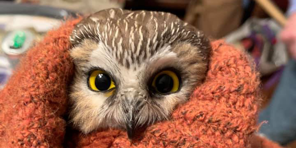 ROCKEFELLER CENTER OWL